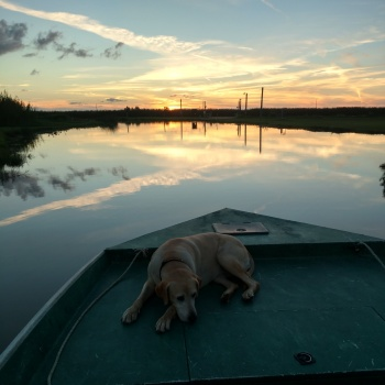 A dog and a boat at sunset in the Mississippi River Delta